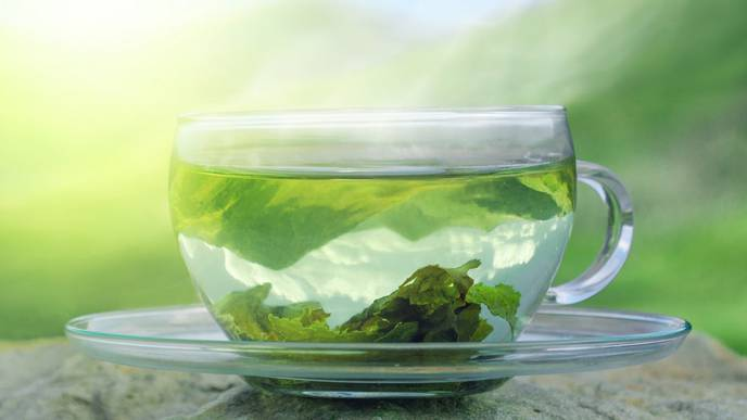 Green Tea & Pulmonary Fibrosis Prevention