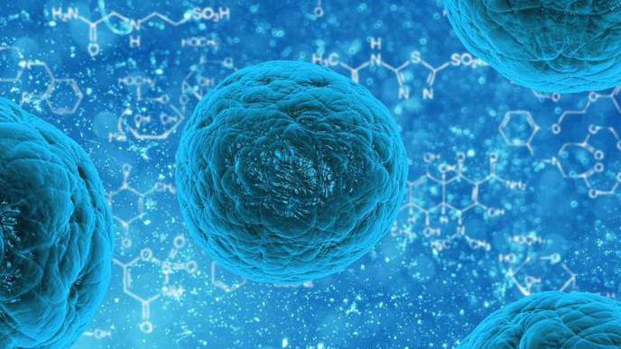 Old Human Cells Rejuvenated with Stem Cell Technology