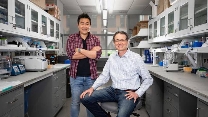 University of Kentucky Researchers Discover Fundamental Roles of Glucosamine in Brain