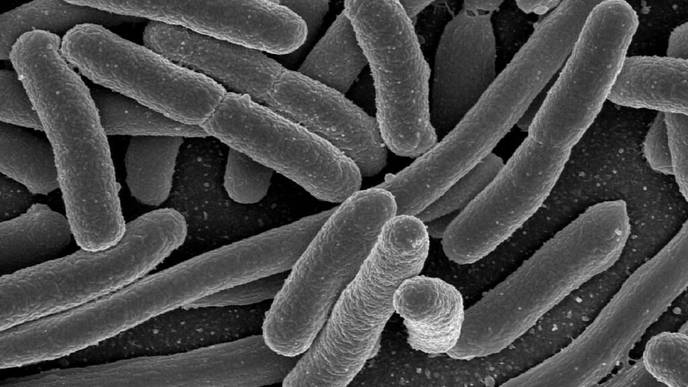 Fighting E. Coli with E. Coli