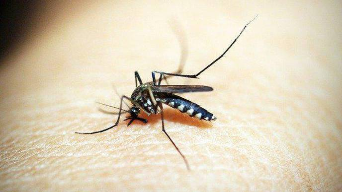 Approved Malaria Drug Joins the Fight Against Deadly Brain Cancer