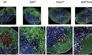 Assessing Racial Disparities in Colorectal Cancer Screening